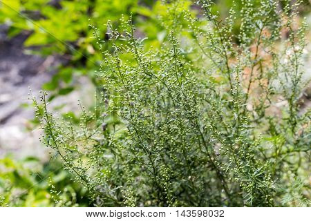 Green grass texture at rock background. Closeup.