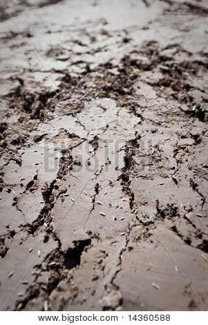 Dried mud with deep cracks