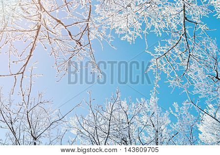 Winter frosty tree tops. Winter background - frosty branches of the winter trees against blue sky. Winter landscape.