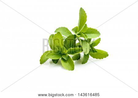 Stevia plant, sweetleaf or sugarleaf (Stevia rebaudiana)
