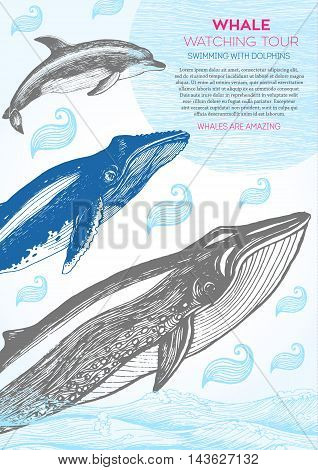 Nautical vector illustration drawn in ink. Whale and dolphin on the waves. Sea design template. Whales and dolphin watching holiday.