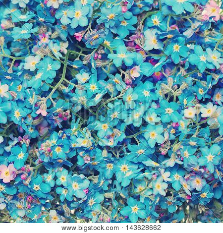 Floral Blossom Background. Blue Forget me nots Flowers