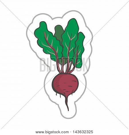 Beetroot illustration. Beetroot EPS10. Beetroot colored. Beetroot flat. Beetroot art. Beetroot label. Beetroot simple