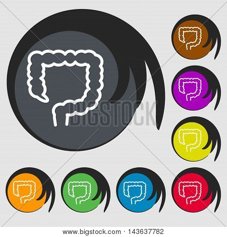 Large Intestine Sign Icon. Symbols On Eight Colored Buttons. Vector