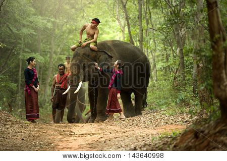 Culture Gui The mahout and the elephant at surinThailand