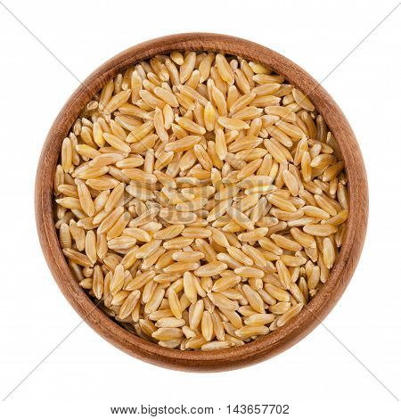 Kamut Khorasan wheat in a wooden bowl on white background. Grains of Oriental wheat, Triticum turanicum, an ancient recultivated grain from the modern-day Iran region. Isolated macro photo close up.