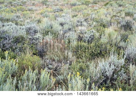 late summer tapestry of wildflowers, sagebrush and other shrubs in North Park of Colorado