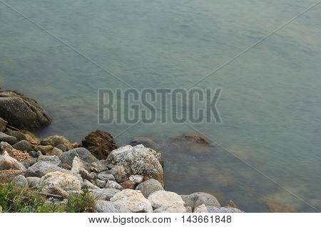 sea plant and rock in the evening