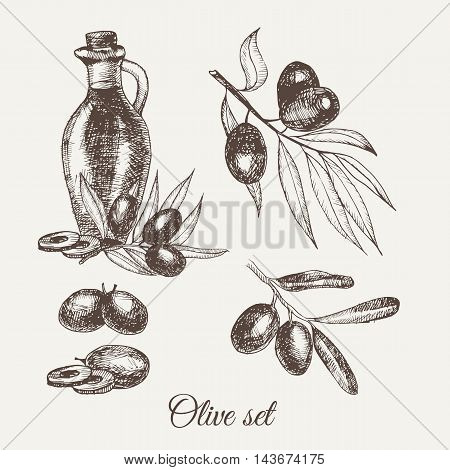 Hand Drawn Pencil Olive Set, Branch And Botle Of Olive Oil. Handdrawn Sketch Of Olives. Vector Illus