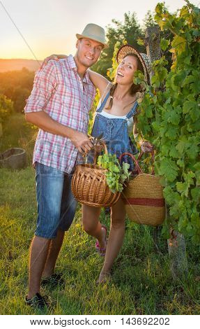 Couple In Grape Picking At The Vineyard With A Basket