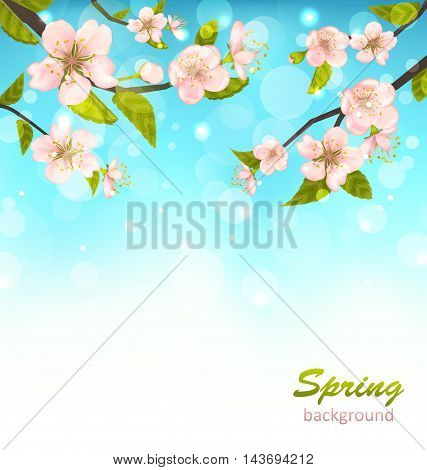 Illustration Beautiful Cherry Blossom, Branches of Tree, Natural Glowing Background - Vector
