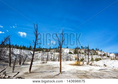 Dead Barren Trees