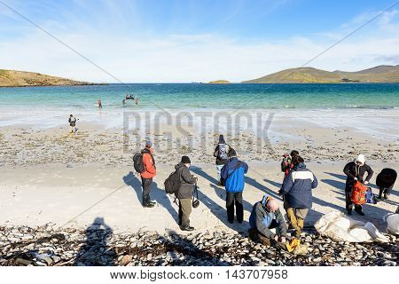 FALKLAND ISLANDS - NOV 5, 2012: Unidentified tourists on the coast of the Falkland Island. Falkland Islands are an archipelago in the South Atlantic Ocean on the Patagonian Shelf