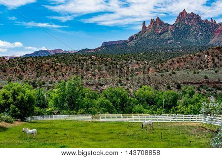 White Horses on a Ranch near Beautiful Mountain Peaks and Rock Formations Near Zion National Park Utah.