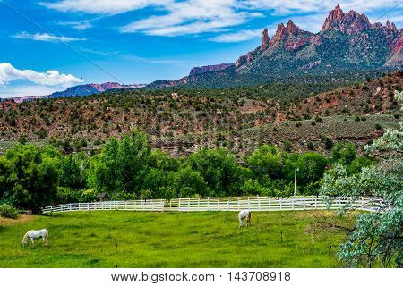 White Horses on a Ranch by Beautiful Rock Formations Near Zion National Park Utah.