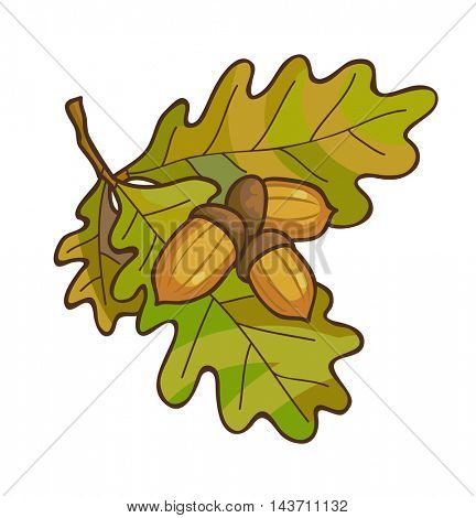 Acorn on oak branch with leaves. Vector illustration. Isolated on white.