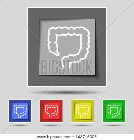 Large Intestine Icon Sign On Original Five Colored Buttons. Vector