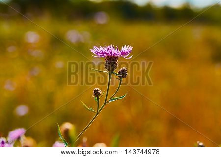 Photo of camomiles on blurred background with light