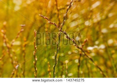 Photo of grass on sunset with light