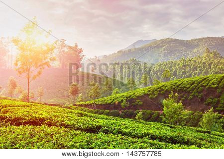 Kerala India travel background - green tea plantations in Munnar, Kerala, India in the morning on sunrise. With lens flare and light leak