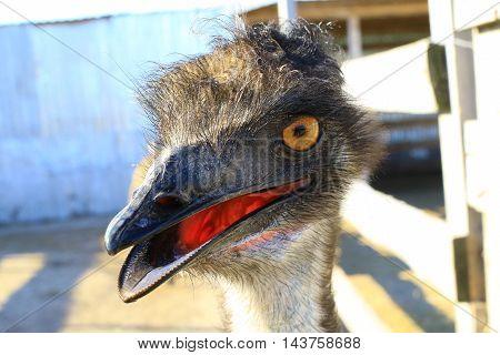 The a portrait emu on a blue background
