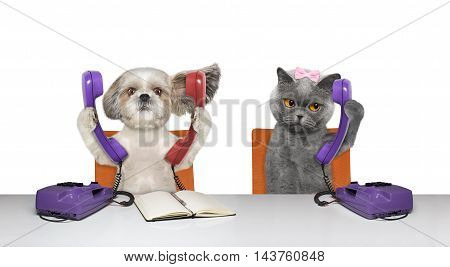 Dod and cat are talking over the phones -- isolated on white