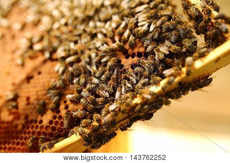 Bees inside a beehive with the queen bee in the middle.