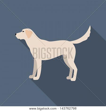 Labrador vector illustration icon in flat design
