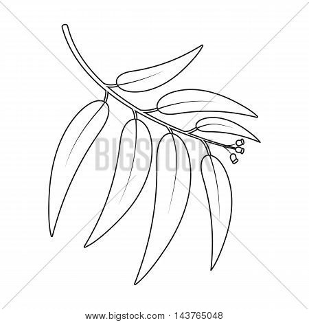 Eucalyptus vector illustration icon in line design