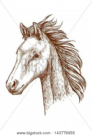 Mustang pencil sketch portrait. Brown horse with waving mane. Proud stallion with bold glance