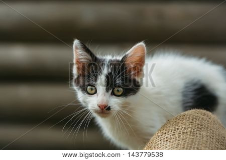 Cute Small Kitten Outdoor