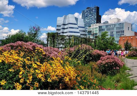 New York City - August 3 2013: Wildflowers in the gardens atop the High Line Park built on a former elevated freight train line on the West Side of Manhattan wth Frank Gehry's futuristic A. I. G. Building in center