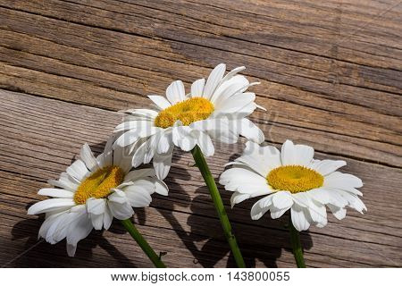 white chamomile flowers on a wooden background