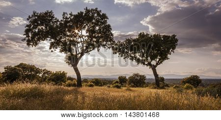 Atardecer en el encinar de Boadilla del Monte, Madrid, Spain