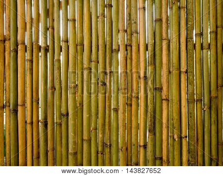 Vintage vertical brown and green bamboo fence texture background.