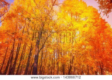 Autumn. Fall Scene.