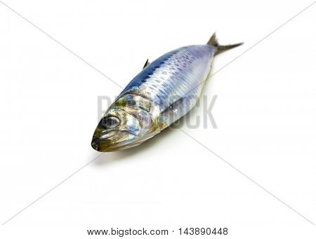 Nice shaped Iwashi Sardines isolated on white. Focus on eye.