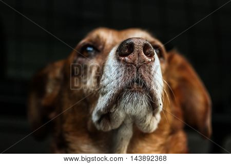 beautiful picture with dogs. impressive detail . Download now. exceptional puppies