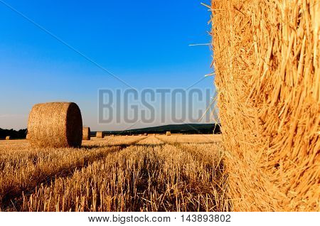 bales of hay. dry grass or rather dead grass shows us the beauty of the plains.