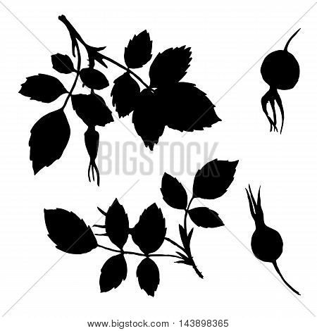 isolated branches silhouettes of briar with leaves and berries, hand drawn illustration, vector black monochrome floral elements