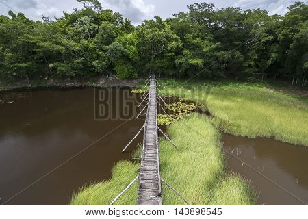Wide angle primitive wooden bridge extending over tropical savannah swamp surrounded by dense tropical forest in Campeche Mexico