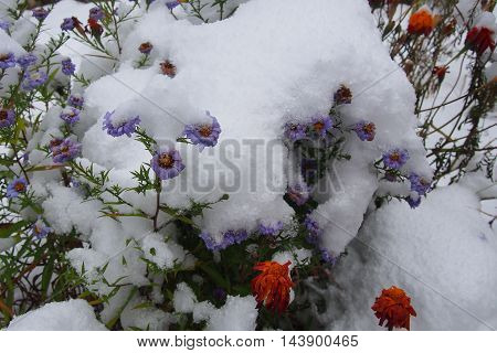 Flowers In The Snow.