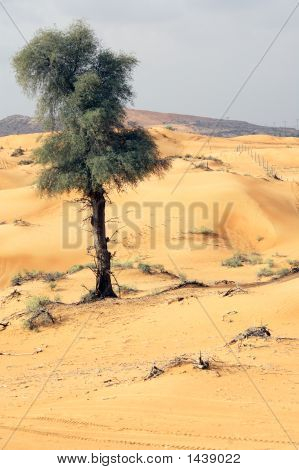 Arabian Desert And Tree