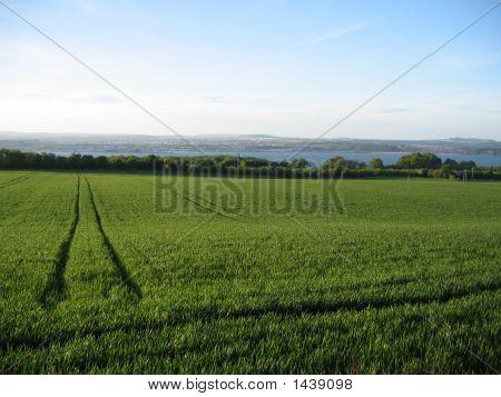Tractor Tracks In A Grassy Field