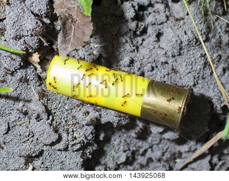 Red fire ants all over a yellow shotshell