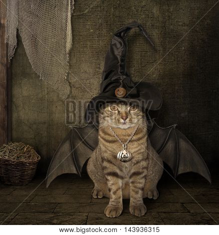 A cat has a wings. It looks like a bat.