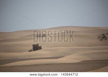 Dunes on Faro , Gran Canaria , sightseeing tour