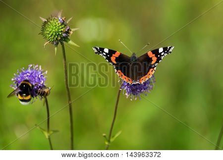 beautiful butterfly and bee on Flower .
