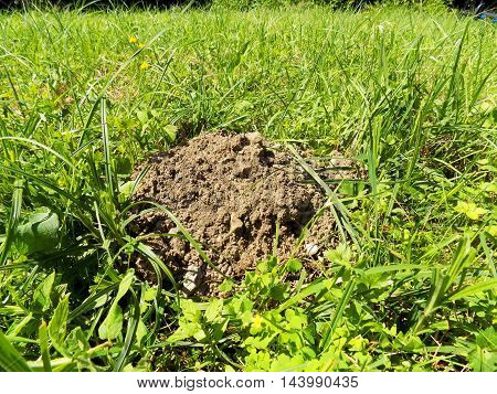 Molehill on meadow after mole attack during day