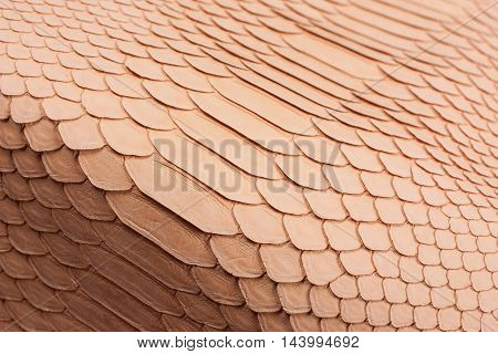 Python snakeskin leather background, snake skin, texture, animal, reptile